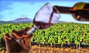 Nuovo Testo Unico del Vino. Tracciamento telematico